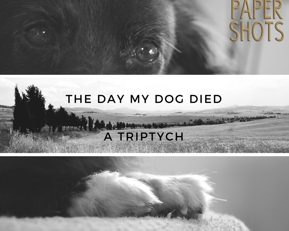 the day my dog died a triptych papershots